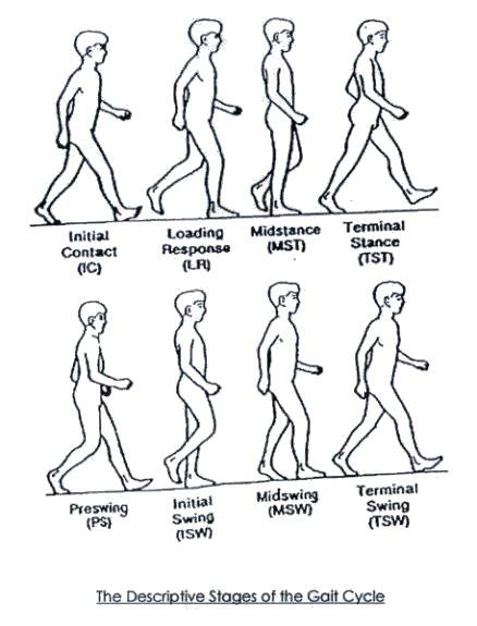 orthoteers  gait